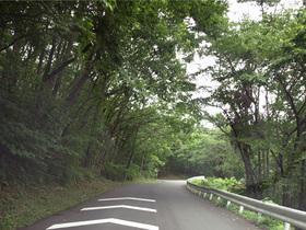 美の山公園に向かう山道2