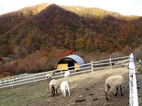 霧降高原大笹牧場のヤギ