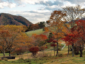 大笹牧場内の紅葉する樹木