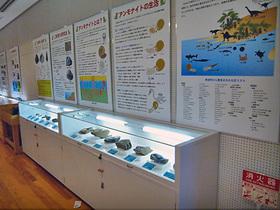 様々な恐竜の展示物