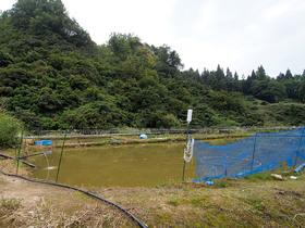 錦鯉の養殖池