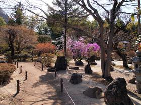 長泉院のお庭