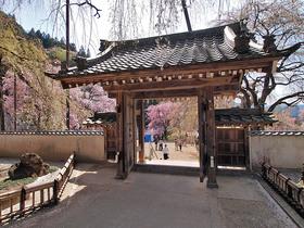 桜が植栽された広場に続く門
