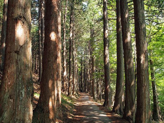 三峯神社奥宮へ続く小道