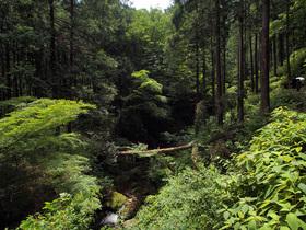 払沢の滝 遊歩道からの景観