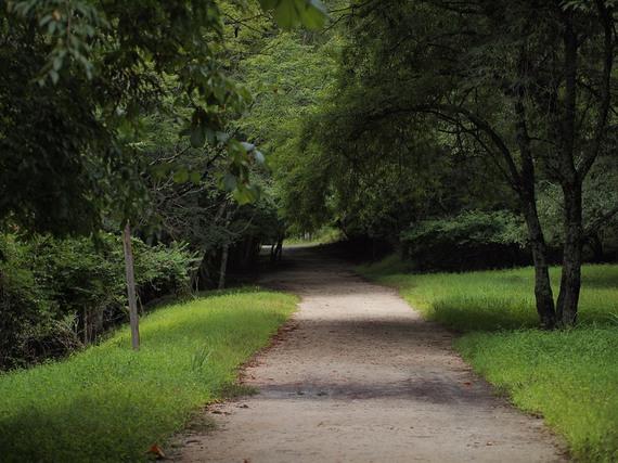 静かな林間道