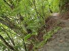 渓谷を眼下に林間の小道
