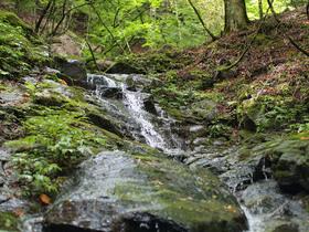 山側を見上げると、所々に水の流れが。