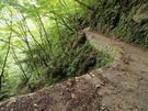 旧森林軌道