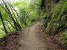 レールが顔を覗かせる旧森林軌道