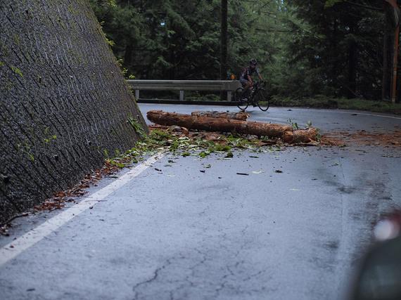 クリスタルラインの倒木
