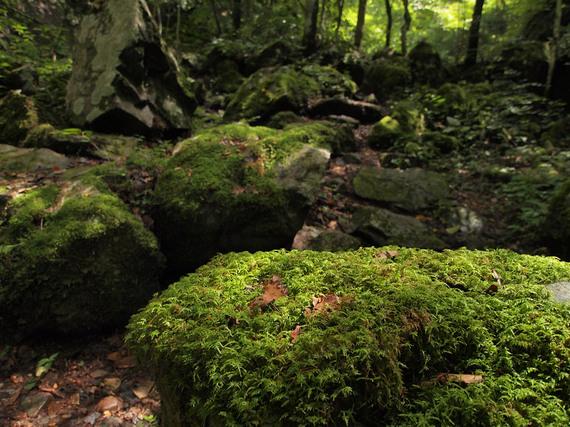 苔に覆われた岩