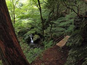 ネジレの滝方向へ進む階段