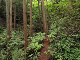 大滝へ向かう林道