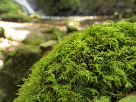苔むした大滝の滝壺周り