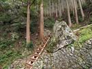 林道からはしご(登山道?)