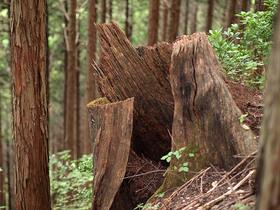 空っぽの木