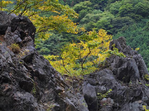 秋の気配を感じる黄葉