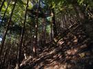 薄暗い林の中の通路