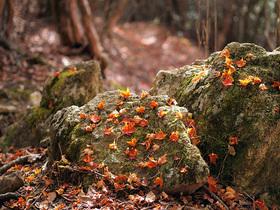 岩と落ち葉