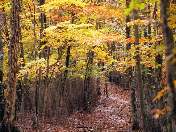 紅葉の浅間尾根