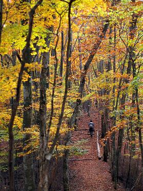 紅葉と下山ハイカー