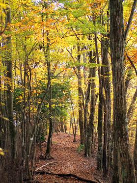 ふかふかの落ち葉に紅葉のトンネル