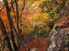 紅葉に包まれる山道