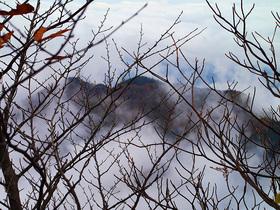 霧により見通しが悪化する山道より