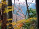 鍋割山に向かう山道脇からの遠望
