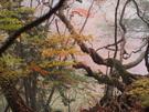 奥の院男具那社周辺の濃い霧
