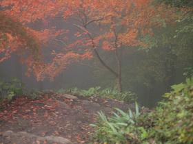霧につつまれた長尾平付近の遊歩道