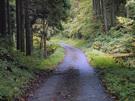 帰路の林道御岳線