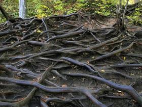 木の根が露出した通路