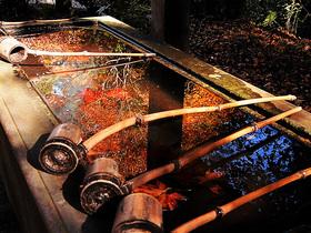 水盤に映りこむ紅葉
