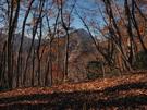 山道からの展望