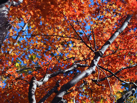 山道脇の紅葉