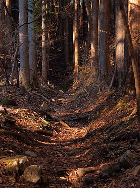 木漏れ日の山道