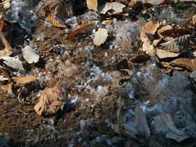 霜が降りる山道