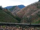 浅間林道 その3