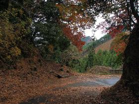 浅間林道の落ち葉と紅葉