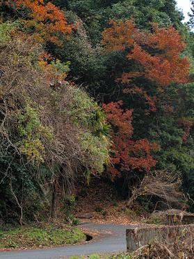 紅葉の残る浅間林道
