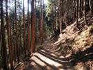 天狗岩・七代の滝方面に向かう山道