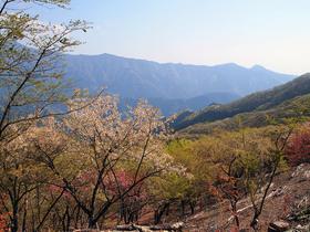浅間嶺展望台から馬頭刈山方面の眺望