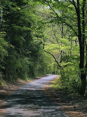 新緑の浅間林道