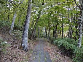 雲取山の妙法ヶ岳登山口までの遊歩道