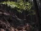 木漏れ日を浴びる山道