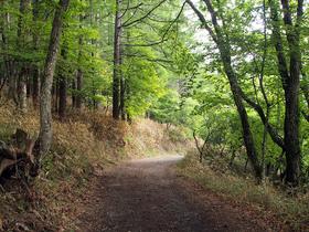 福ちゃん荘付近の林道