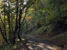 岩魚沢林道