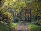 色づく上信越自然歩道